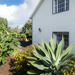 Pico Azores Plants Garden Holiday Home